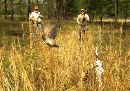 Georgia Deer Hunting Trips Whitetail Deer Season License