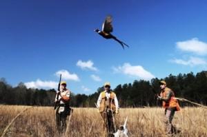 pheasant-hunting-ga
